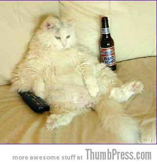 Beer and tv cat