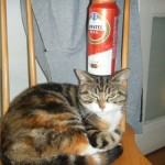 Beer balance cat 1