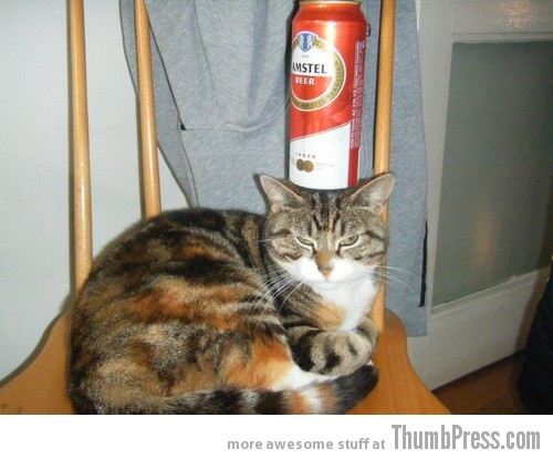 Beer balance cat 1 Catoxication: 15 Hilarious Pictures of Cats Drinking or Drunk