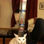 Beer balance cat 2