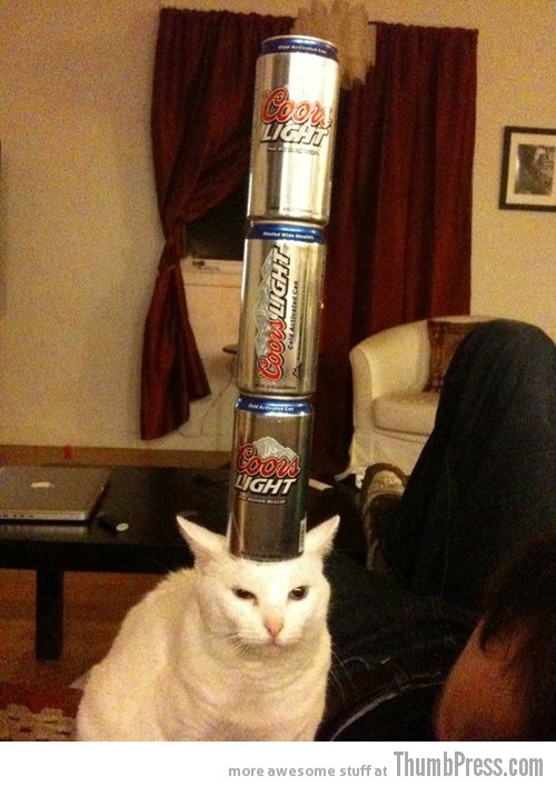 Beer balance cat 2 Catoxication: 15 Hilarious Pictures of Cats Drinking or Drunk