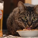 Cat food and beer