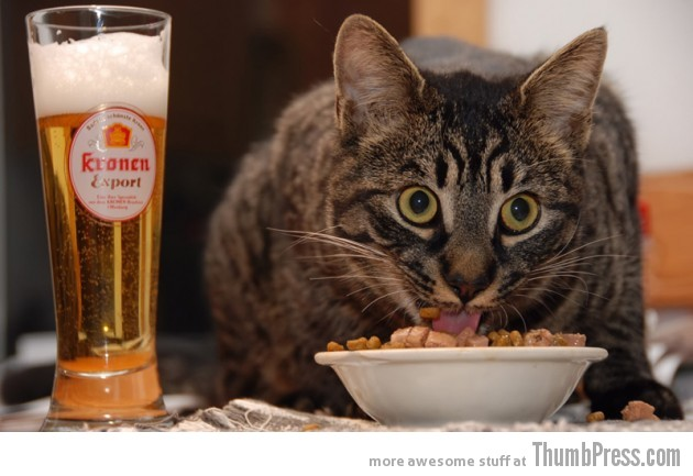 Cat food and beer 630x433 Catoxication: 15 Hilarious Pictures of Cats Drinking or Drunk