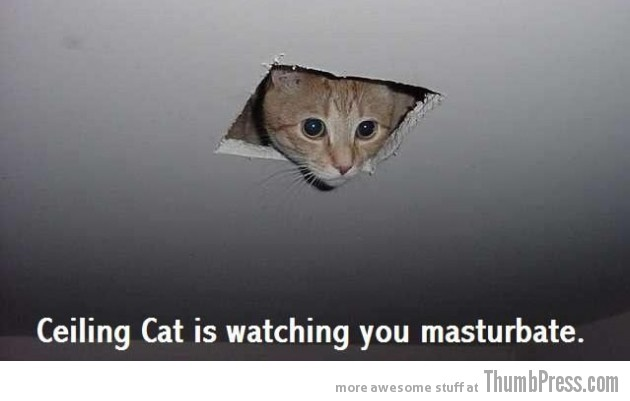 Ceiling cat 630x401 Caption Cats: 25 Hilarious Cat Photos Spiced up With Even Funnier Captions