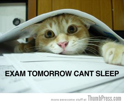 Exams tomorrow Caption Cats: 25 Hilarious Cat Photos Spiced up With Even Funnier Captions