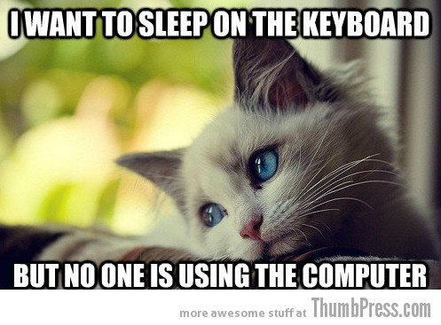 First World Problems Cat - 1