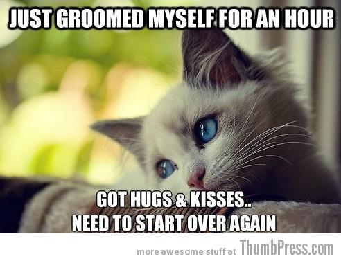 First World Problems Cat - 11