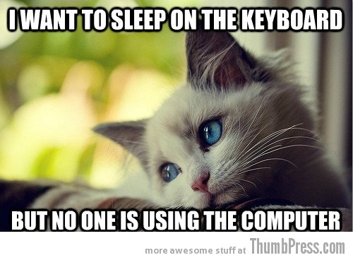 First World Problems Cat - 14