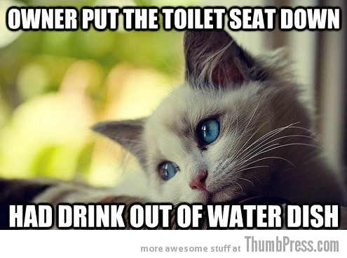 First World Problems Cat 15 Sad Cat Is Sad: 25 Hilarious First World Problems Cat Meme