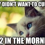 First World Problems Cat - 17