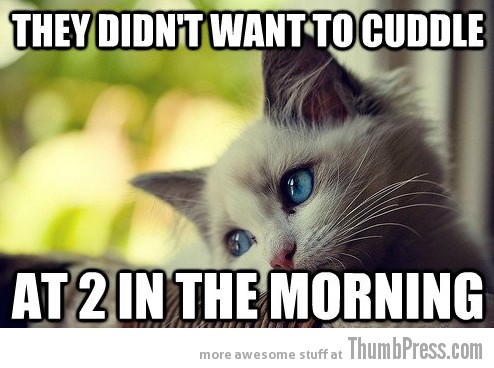 First World Problems Cat 17 Sad Cat Is Sad: 25 Hilarious First World Problems Cat Meme