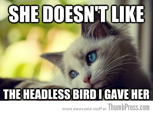 First World Problems Cat 2 Sad Cat Is Sad: 25 Hilarious First World Problems Cat Meme