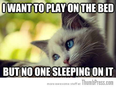 First World Problems Cat 22 Sad Cat Is Sad: 25 Hilarious First World Problems Cat Meme