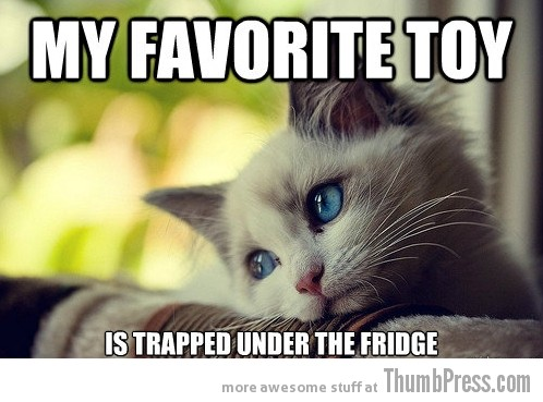 First World Problems Cat 4 Sad Cat Is Sad: 25 Hilarious First World Problems Cat Meme
