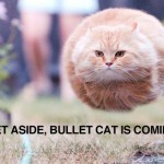 Get aside bullet cat