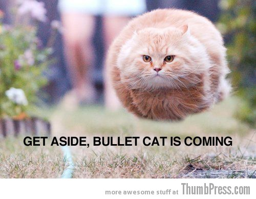 Get aside bullet cat Caption Cats: 25 Hilarious Cat Photos Spiced up With Even Funnier Captions