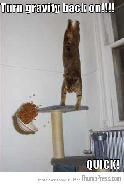Gravity back on Caption Cats: 25 Hilarious Cat Photos Spiced up With Even Funnier Captions