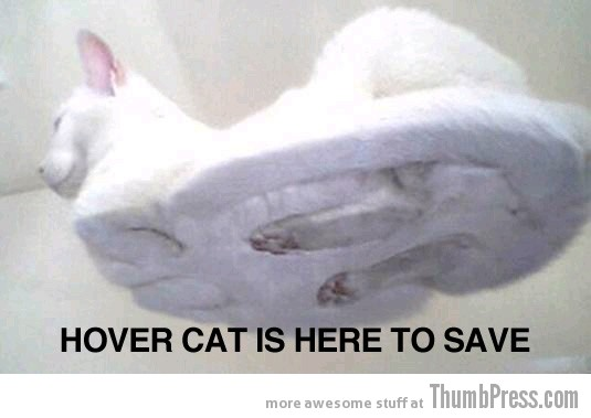 Hover cat Caption Cats: 25 Hilarious Cat Photos Spiced up With Even Funnier Captions
