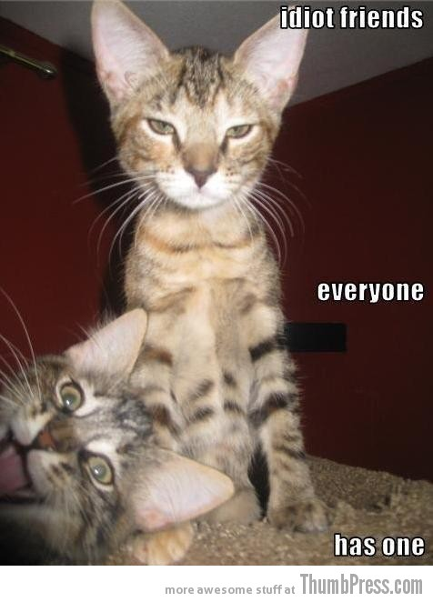 Idiot friends Caption Cats: 25 Hilarious Cat Photos Spiced up With Even Funnier Captions