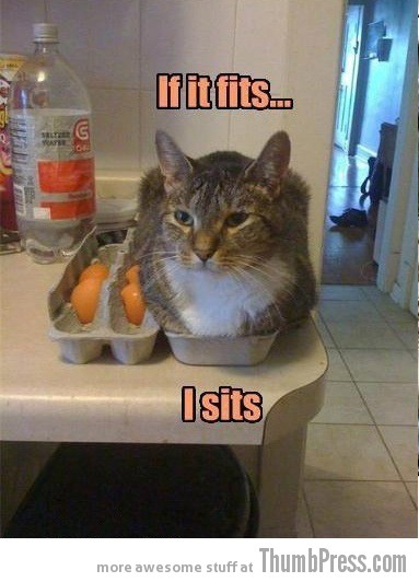 If it fits i sits Caption Cats: 25 Hilarious Cat Photos Spiced up With Even Funnier Captions