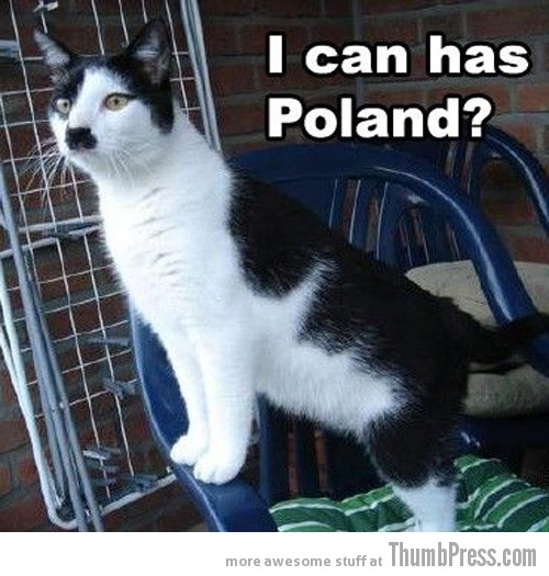 Kitler Caption Cats: 25 Hilarious Cat Photos Spiced up With Even Funnier Captions