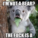 Koala Bear - Meme - 1