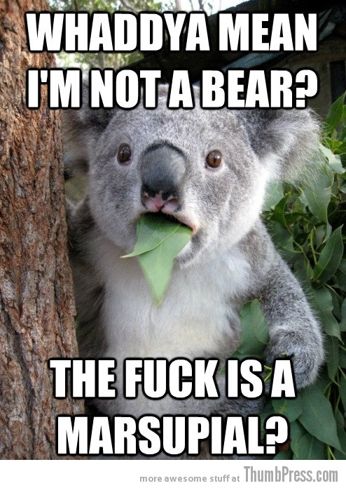 Koala Bear Meme 1 Best Of Surprised Koala Bear Meme (25 Pics)
