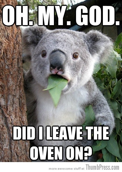 Koala Bear Meme 10 Best Of Surprised Koala Bear Meme (25 Pics)