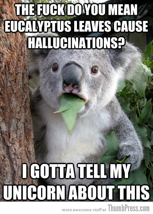 Koala Bear - Meme - 11