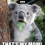 Koala Bear - Meme - 12