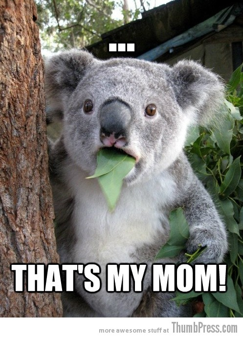 Koala Bear Meme 12 Best Of Surprised Koala Bear Meme (25 Pics)