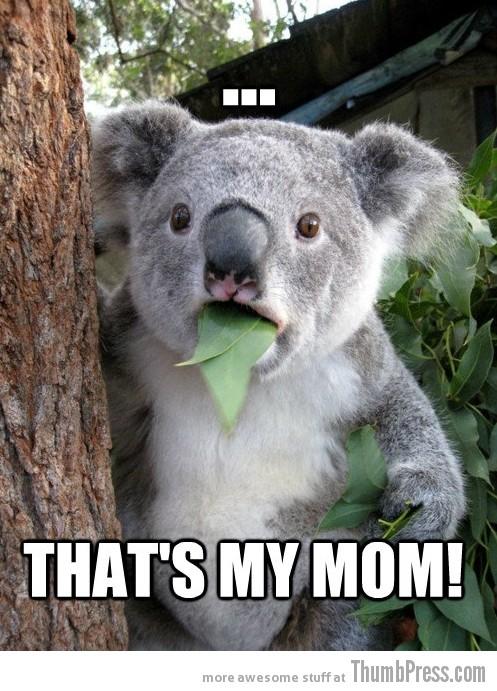 Koala Bear - Meme - 12