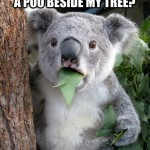 Koala Bear - Meme - 14