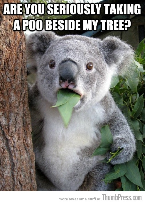 Koala Bear Meme 14 Best Of Surprised Koala Bear Meme (25 Pics)