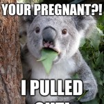 Koala Bear - Meme - 16