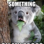 Koala Bear - Meme - 17