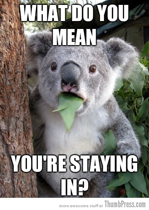 Koala Bear Meme 18 Best Of Surprised Koala Bear Meme (25 Pics)