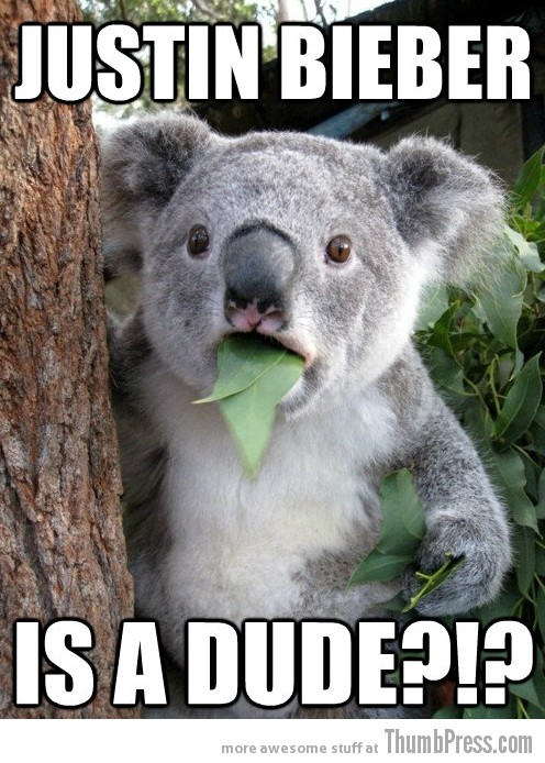 Koala Bear Meme 22 Best Of Surprised Koala Bear Meme (25 Pics)