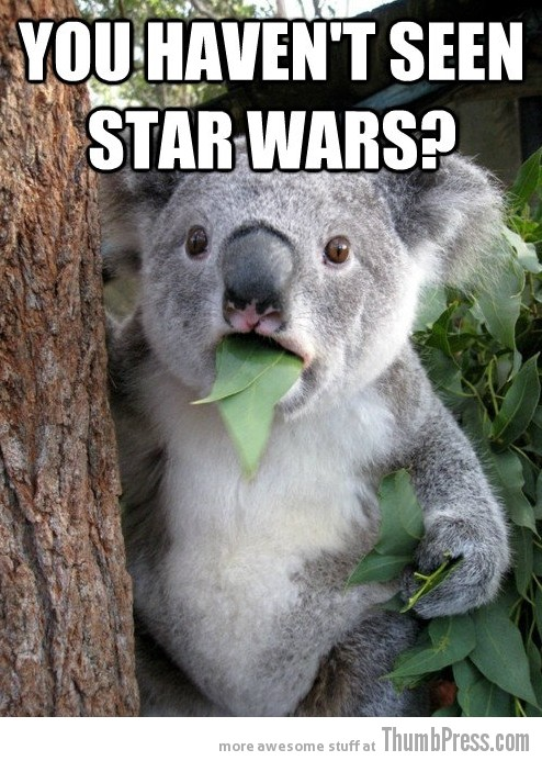 Koala Bear Meme 23 Best Of Surprised Koala Bear Meme (25 Pics)