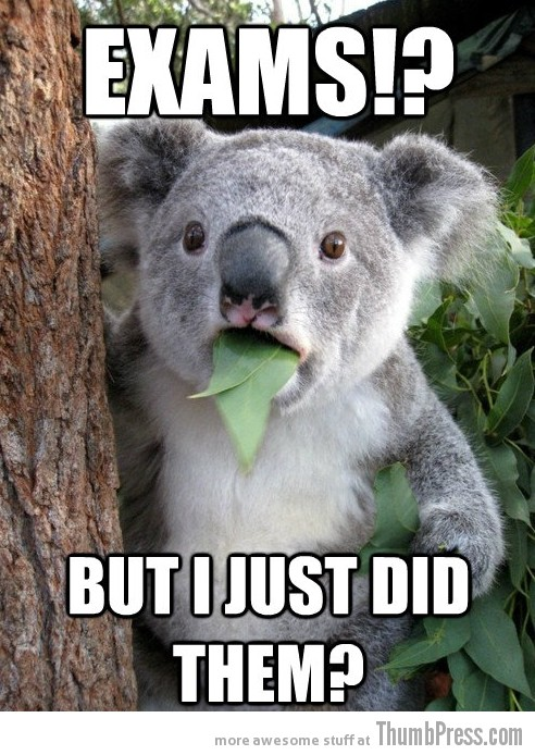 Koala Bear Meme 24 Best Of Surprised Koala Bear Meme (25 Pics)