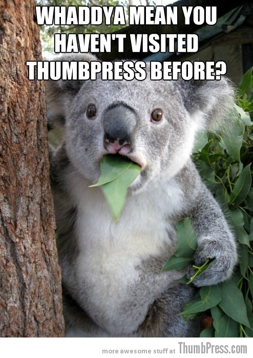 Koala Bear Meme 25 Best Of Surprised Koala Bear Meme (25 Pics)