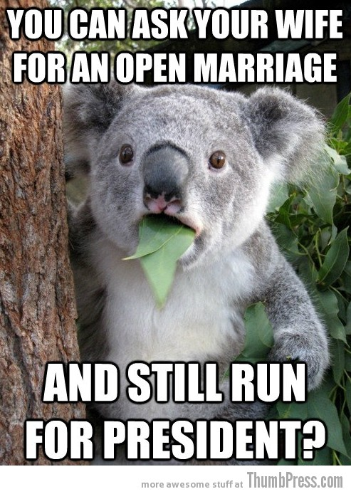 Koala Bear Meme 4 Best Of Surprised Koala Bear Meme (25 Pics)