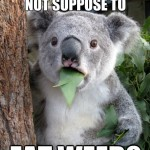 Koala Bear - Meme - 9