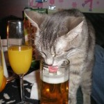 Licking the beer cat
