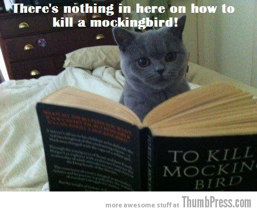 Mockingbird Caption Cats: 25 Hilarious Cat Photos Spiced up With Even Funnier Captions