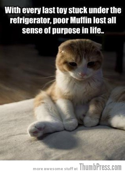 Muffin Caption Cats: 25 Hilarious Cat Photos Spiced up With Even Funnier Captions
