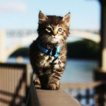 ON THE CAT WALK