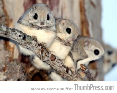 OOOOOH NUTS The Awwsome Cuties Are Here to Save The World (30 Heart Melting Pics)