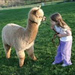 PUFF ALPACA