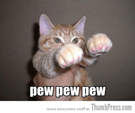 Pew pew pew Caption Cats: 25 Hilarious Cat Photos Spiced up With Even Funnier Captions